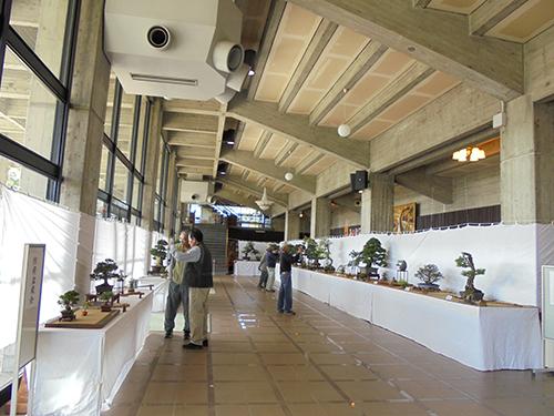 第49回 防府市民文化祭 盆栽展のイメージ