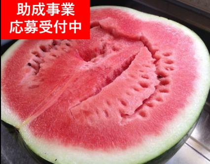 助成制度のご案内(6月29日〜)