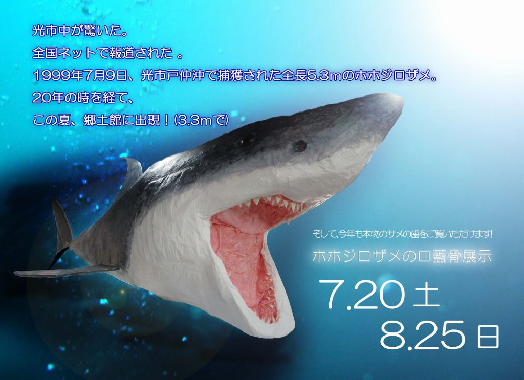 ホホジロザメの口蓋骨展示&五感で感じる郷土の夏のイメージ