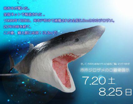 ホホジロザメの口蓋骨展示&五感で感じる郷土の夏