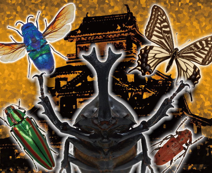 特別展「萩・昆虫城 夏の陣」のイメージ